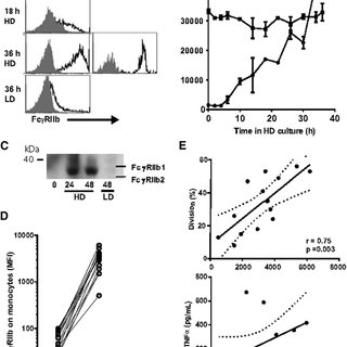 T-cell proliferation in response to anti-CD3 and anti-CD28