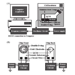 (PDF) QCM as Cell-Based Biosensor