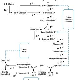 a representative scheme of m fermentans proteins involved in the download scientific diagram [ 850 x 1030 Pixel ]