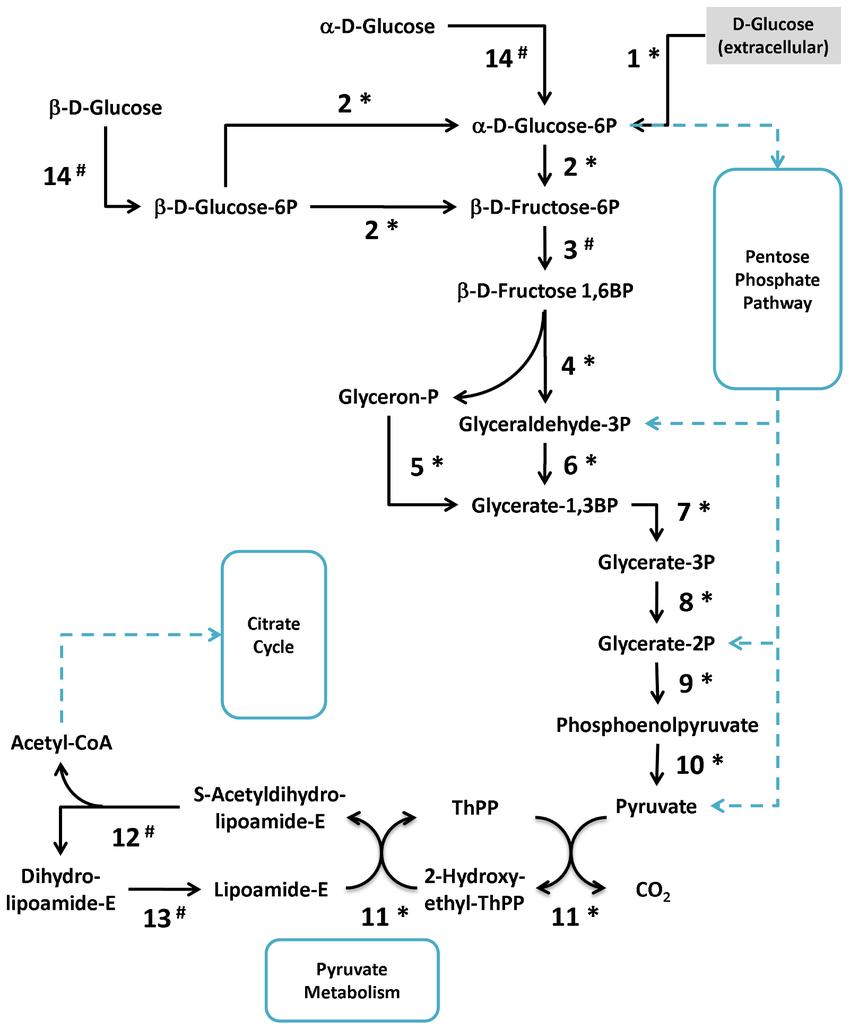 medium resolution of a representative scheme of m fermentans proteins involved in the download scientific diagram