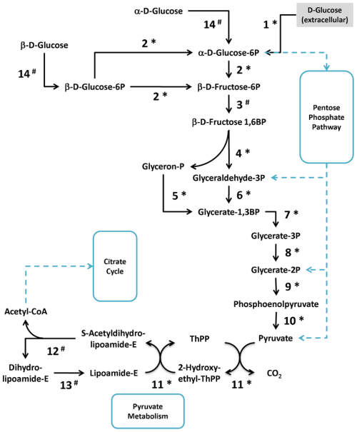 small resolution of a representative scheme of m fermentans proteins involved in the download scientific diagram