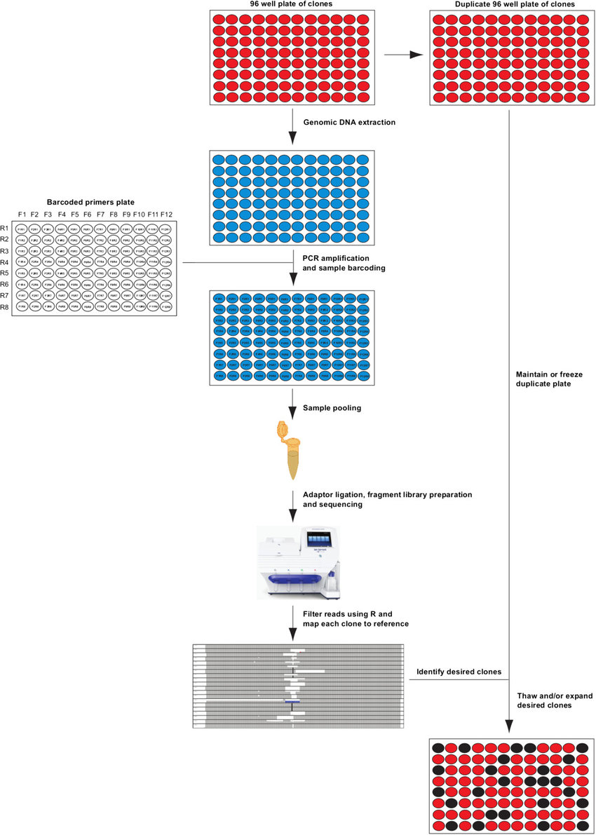 context diagram for library system how to do a stem leaf crispr-cas9 screening workflow. duplicate 96 well plates of cell clones... | download scientific ...