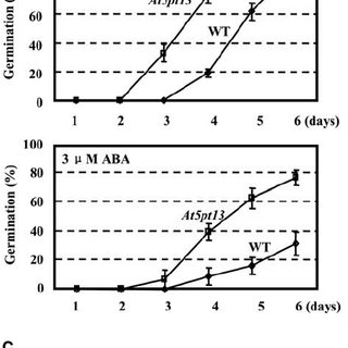 Altered auxin accumulation and distribution in At5PTase13