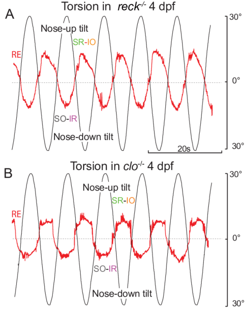small resolution of torsional eye movements in reck and cloche mutants a b torsional eye rotations in