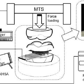 (PDF) Occlusive bite force measurement utilizing flexible