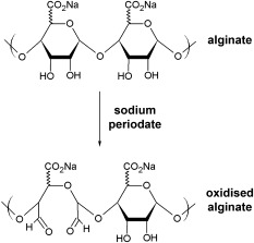 The reaction scheme for oxidation of alginate by sodium