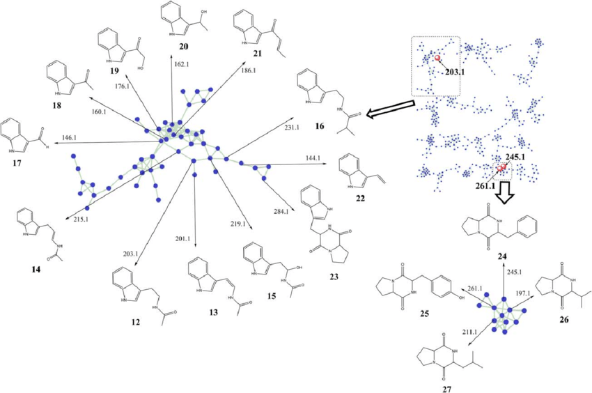 A combination of GNPS molecular networking and OPLS-DA