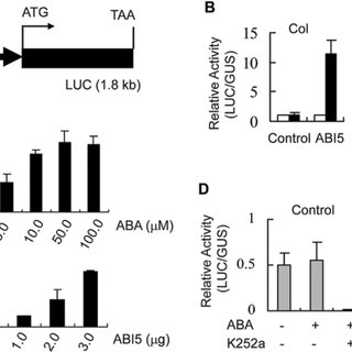 (PDF) The inhibitory effect of ABA on floral transition is