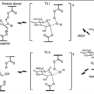 Double-displacement reaction mechanism of retaining GHs