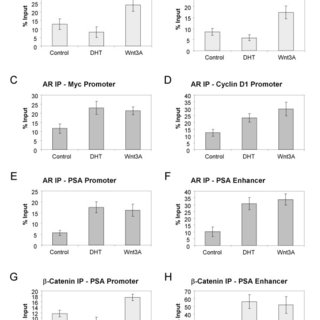 Expression of AR and β-Catenin in normal prostate tissues