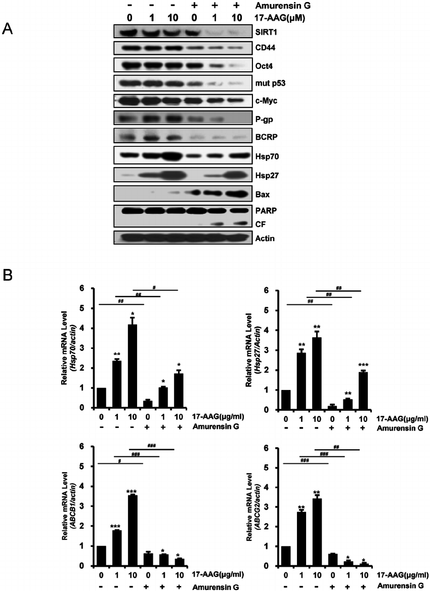 Inhibition of protein levels of CSC-related molecules and