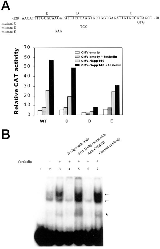 Nopp140 Is a Mediator of the Protein Kinase A Signaling