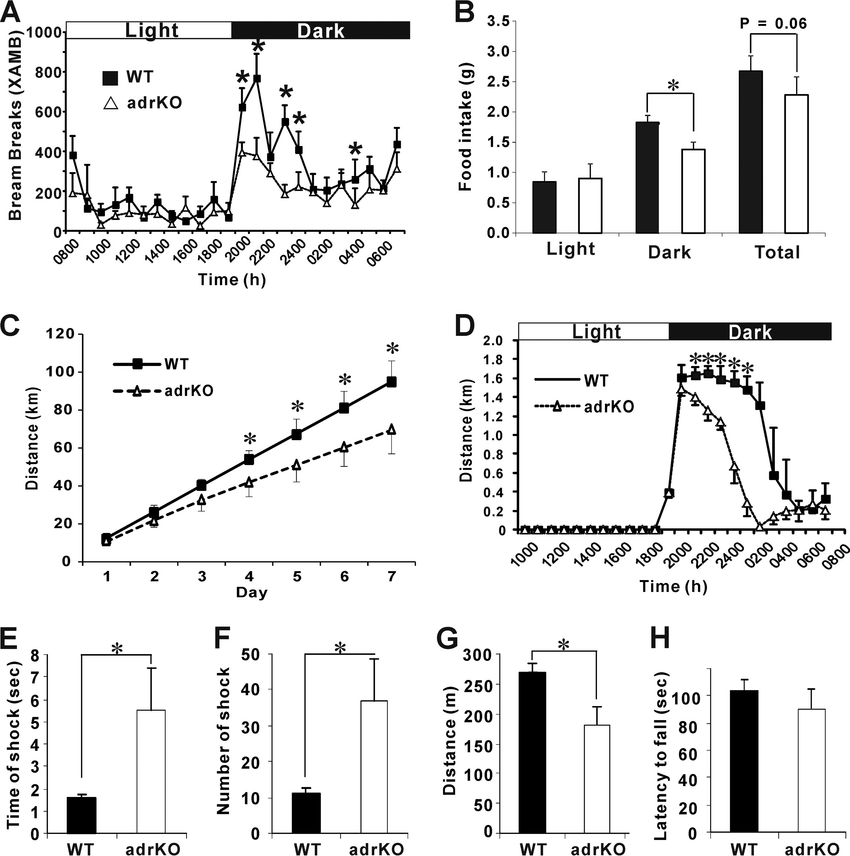 Physical activity is decreased in adrKO mice. A and B