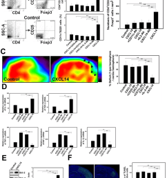 cxcl14 injection promoted treg modulated neural survival in the post stroke brain  [ 850 x 1121 Pixel ]