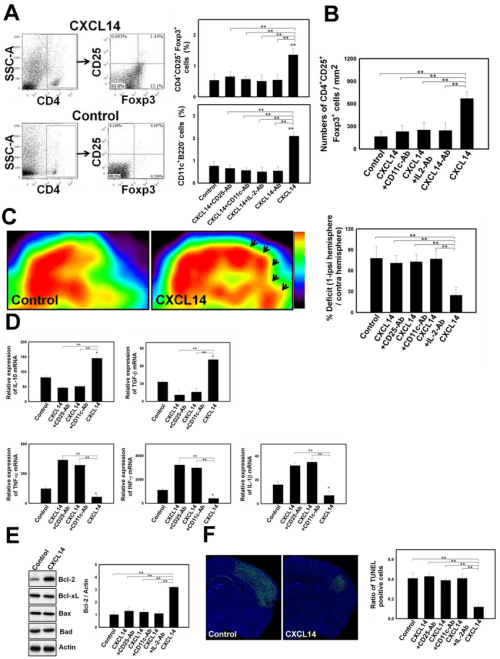 small resolution of cxcl14 injection promoted treg modulated neural survival in the post stroke brain