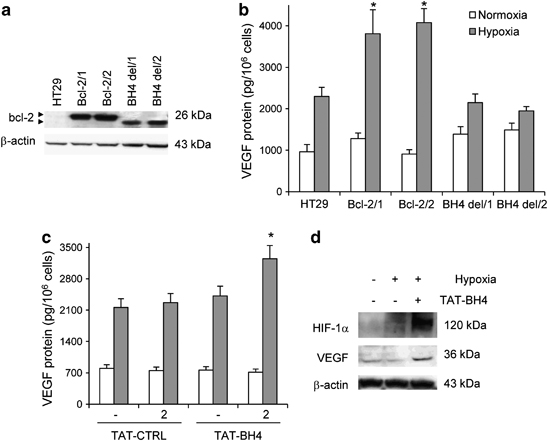 Bcl-2 deleted of its BH4 domain is not a dominant-negative