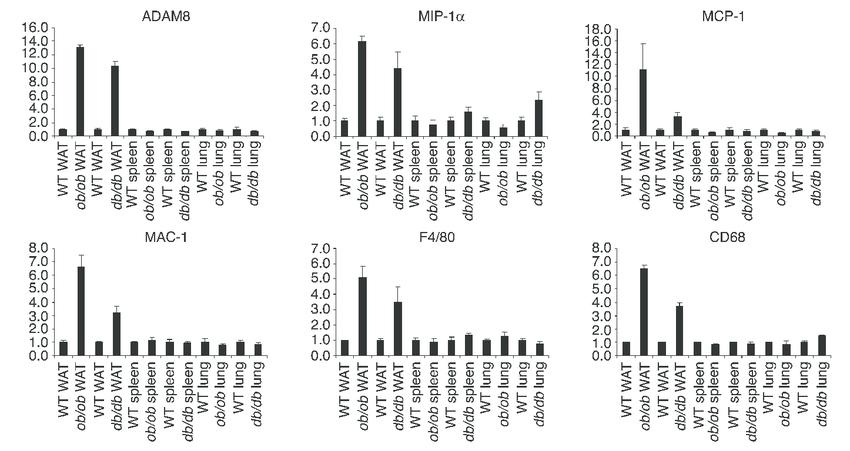 The transcriptional regulation of ADAM8, MIP-1α, MCP-1