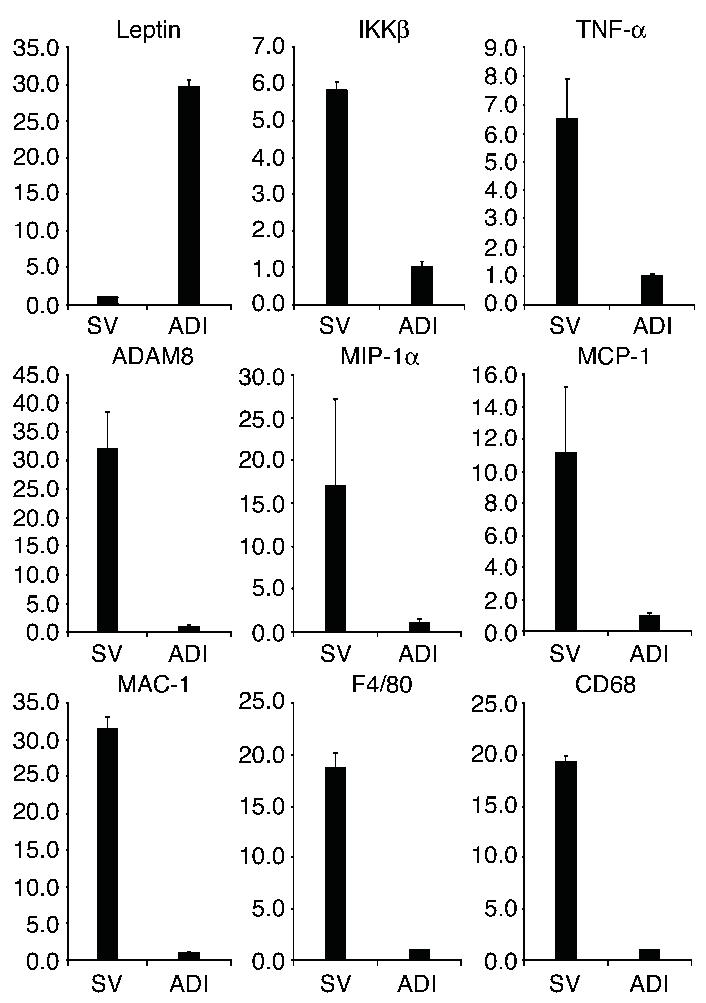 The mRNA expression of ADAM8, MIP-1α, MCP-1, MAC-1, F4/80