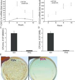 ifn b induces chemokines and enhances phagocyte killing of s aureus a [ 850 x 1054 Pixel ]