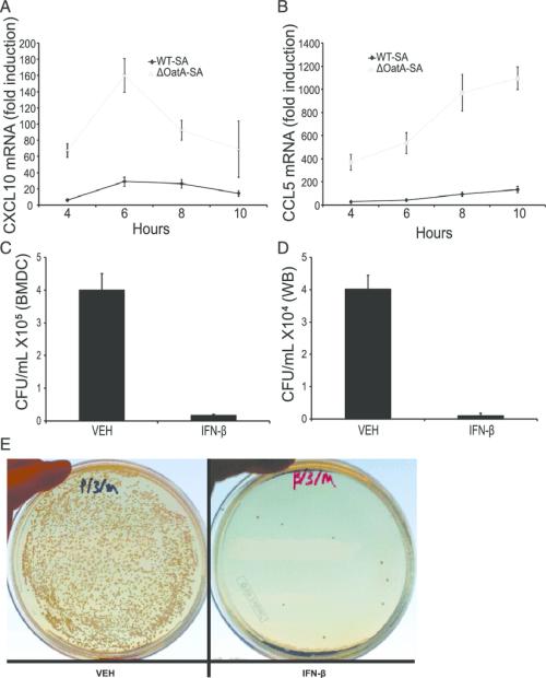 small resolution of ifn b induces chemokines and enhances phagocyte killing of s aureus a