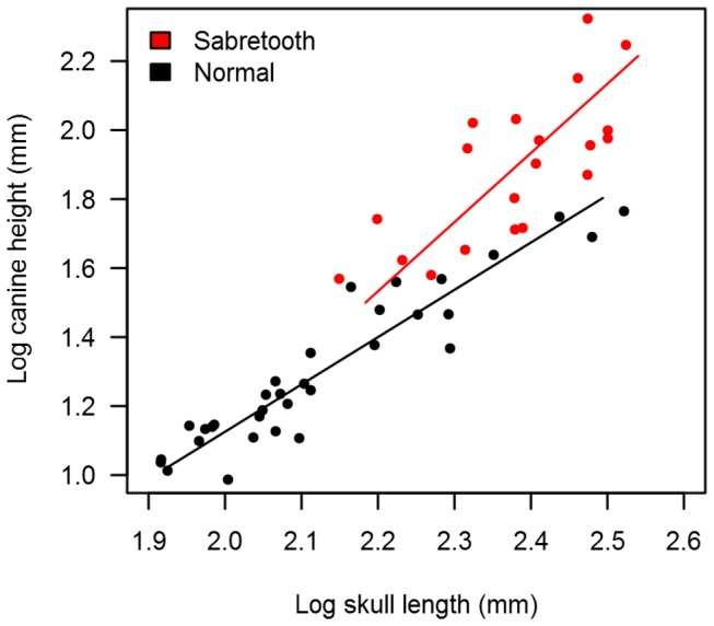 Regression of canine height against skull length.
