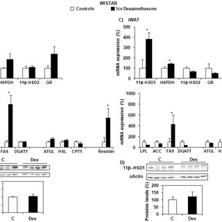 (PDF) Central Glucocorticoid Administration Promotes
