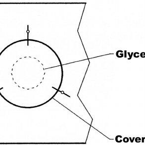 (PDF) Mongolian Rotifers on Micr oscope Slides