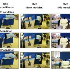 Roman Chair Back Extension Muscles Homesense Covers Pdf Effect Of Pelvic Stabilization And Hip Position On Trunk Conditions Left Pictures Corresponding Maximal Voluntary Reference Contractions Middle