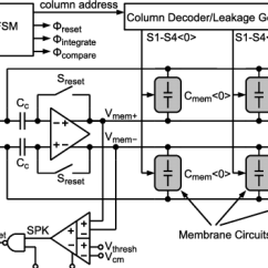 Detailed Neuron Diagram Basic Electrical Wiring Circuit A Of The Membrane Can Be Found In Fig
