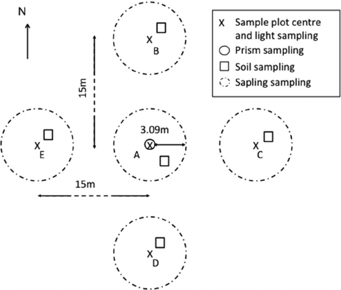 Sampling design representing the five sample plots (A, B