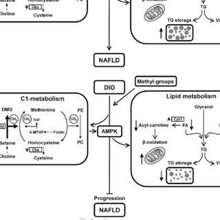 Analysis of blood plasma for selected metabolite