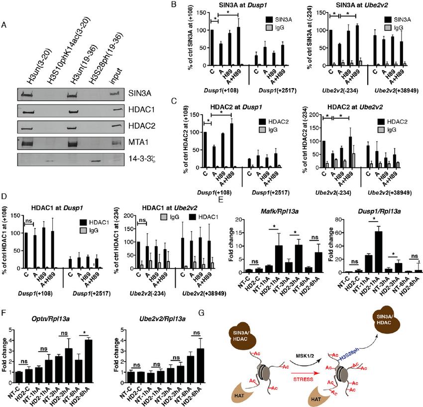 H3S28ph mediates the dissociation of HDAC-containing