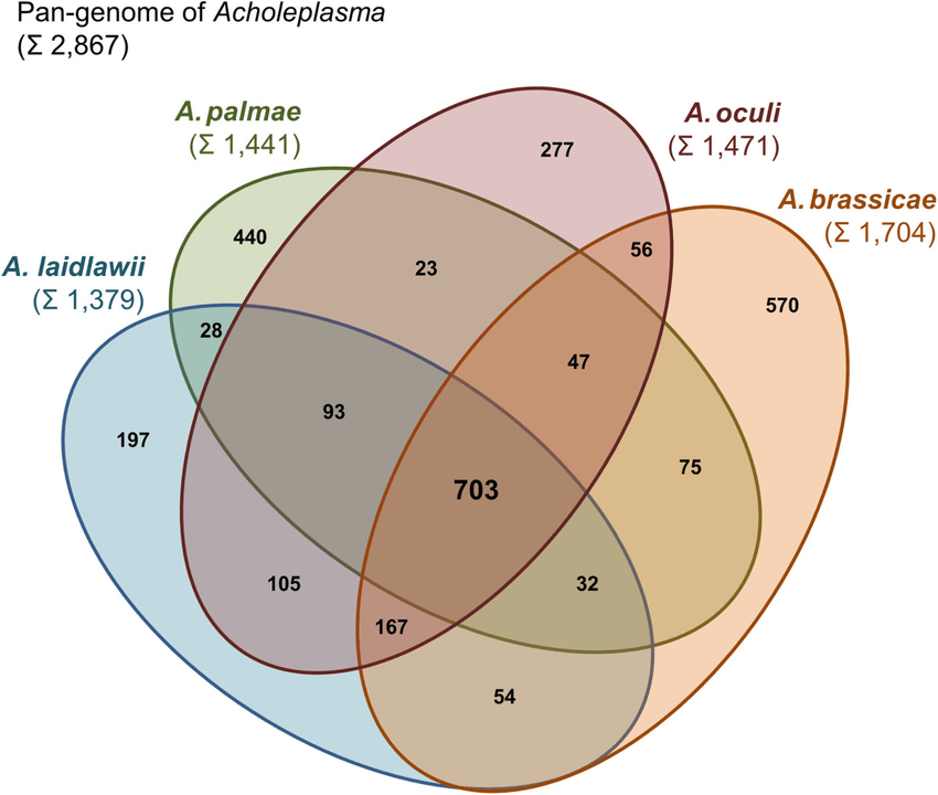 4 variable venn diagram 1996 yamaha blaster wiring four set of the pan genome genus acholeplasma based on prediction orthologous proteins by panoct each ellipse shows in sum