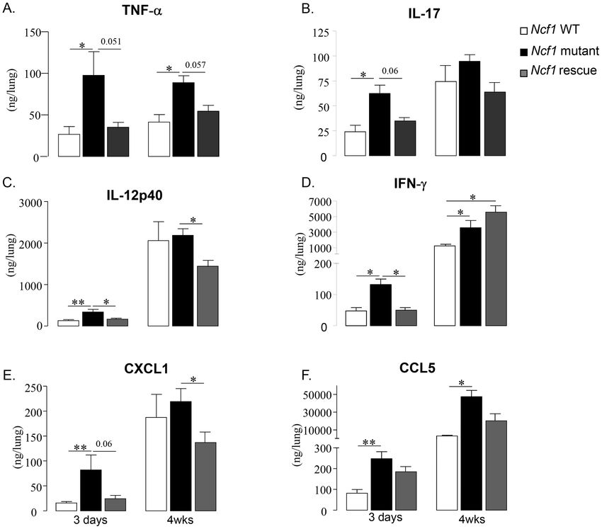 Cytokine and chemokine responses to BCG infection. TNF-α