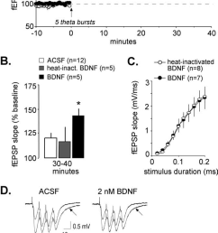 bdnf corrects the ltp deficit in fragile x hippocampus a five theta bursts were [ 673 x 1315 Pixel ]