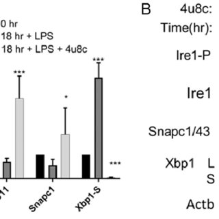 snRNAs decrease after LPS stimulation. (A) QPCR was