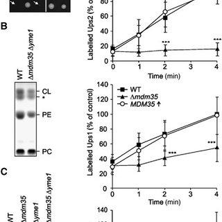 (PDF) Regulation of mitochondrial phospholipids by Ups1