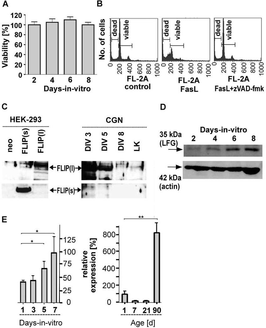 Resistance of CGNs against FasL-induced apoptosis and