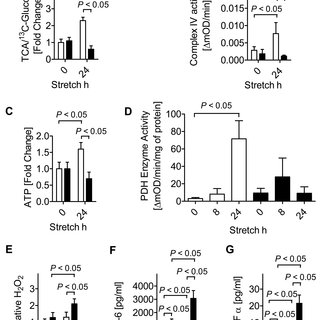 Functional consequences of HIF1A activation during ALI. (A