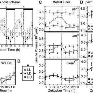 (PDF) Circadian Plasticity in Photoreceptor Cells Controls