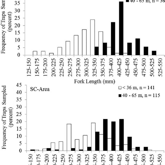 Size-class frequency distributions (FL, mm) of male Gray