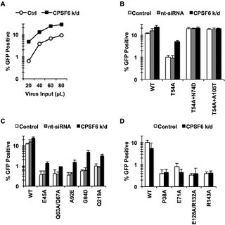 (PDF) In vivo functions of CPSF6 for HIV-1 as revealed by