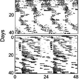 (PDF) Daily and Tidal Rhythms in Intertidal Marine