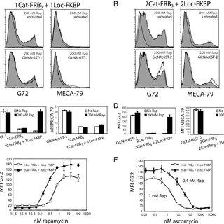 A chemical approach for modulating Golgi sulfotransferase