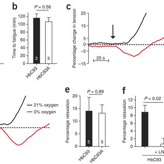 (PDF) SNO-hemoglobin is not essential for red blood cell
