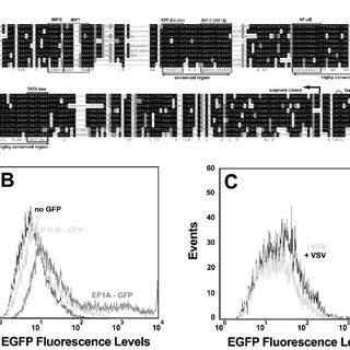 (PDF) Development of multifunctional plasmids for diverse