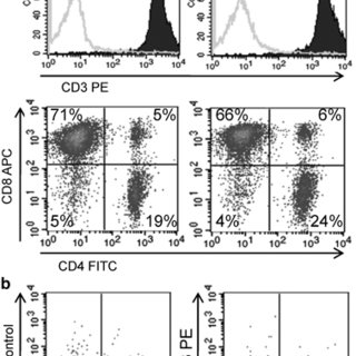 Reduction of T-cell transgene expression over time in