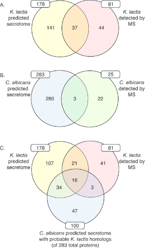 small resolution of venn diagrams indicating the intersection of a the k lactis cps and k