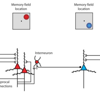 (PDF) Role of Prefrontal Persistent Activity in Working Memory