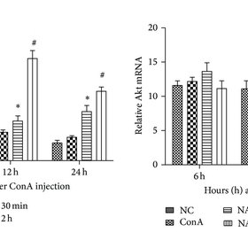 (PDF) Protective Effects of N-Acetylcysteine in